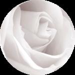 rose-rund